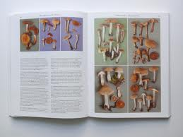 Roger Phillips-Mushrooms - Open Book
